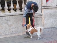 Jalan bareng anjing di Teheran